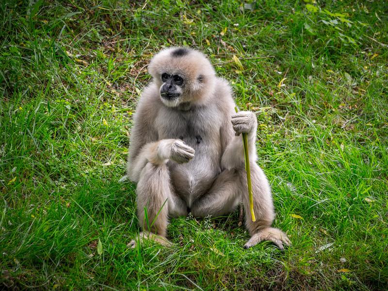 Zoo Parc Overloon_15062013 (13 van 178).jpg