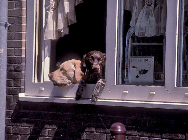 Window Amsterdam.jpg
