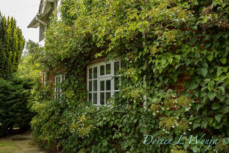 Beechleigh Garden - Jacky O'Leary garden designer_2994.jpg