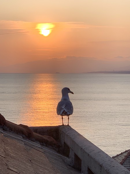 Seagull on our roof