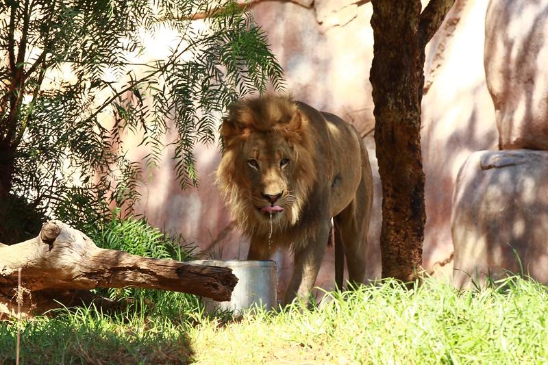 San Diego wild animal pakr 201700078.jpg