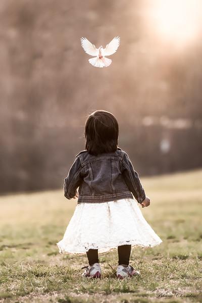 Hanu Dove Bird 1.jpg