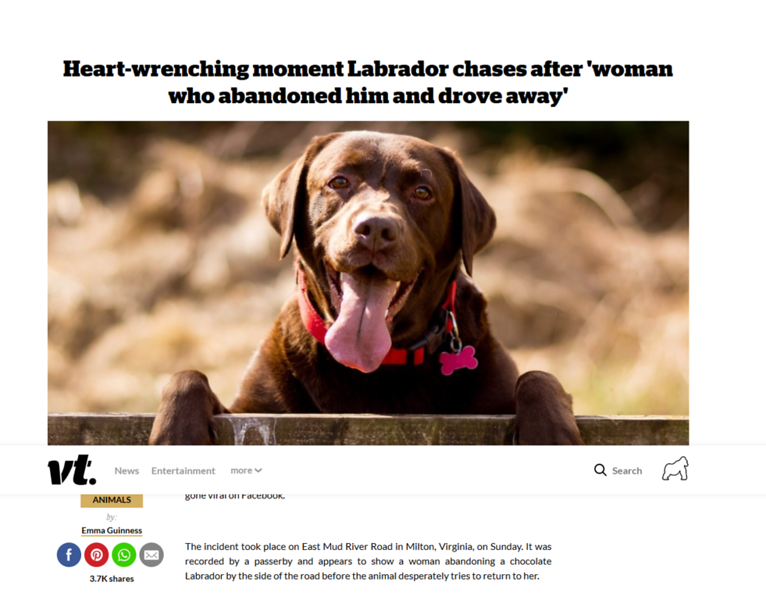 Screenshot_2019-10-17 Heart-Wrenching Moment Labrador Chases After 'Woman Who Abandoned Him And Drove Away'.png