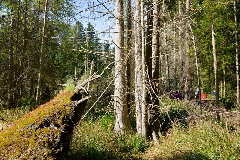 wetlands2_13.JPG