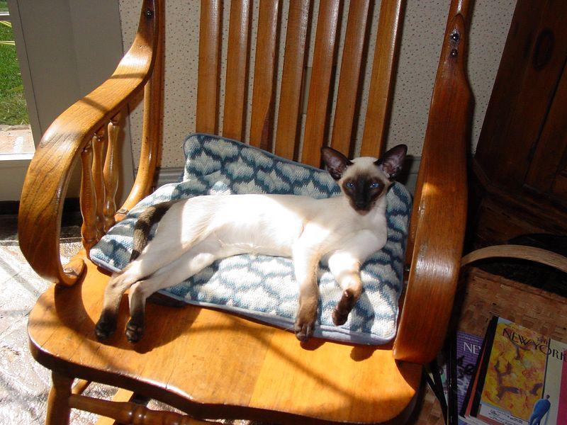 Ari in Chair.JPG