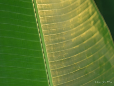 Vlindertuin Klein Costa Rica (NL)
