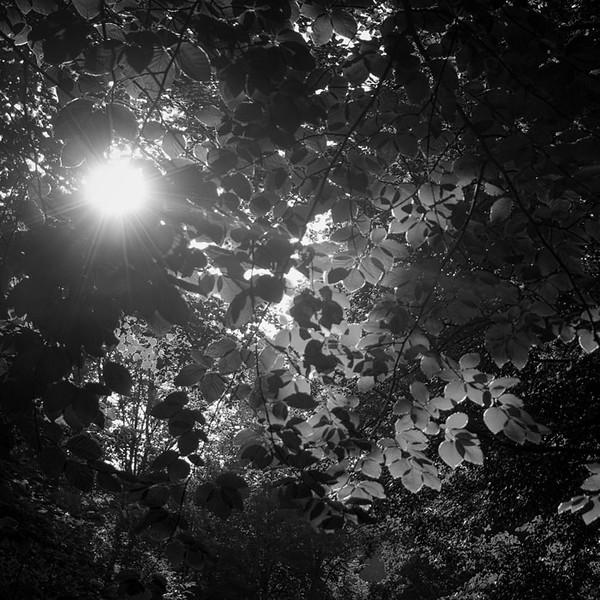 boslicht6.jpg