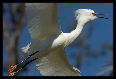 Baylands Preserve - Take two
