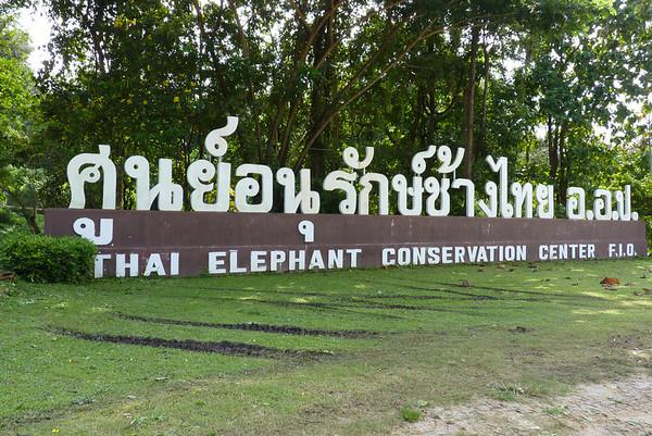 2011 OCT 19 ELEPHANTS