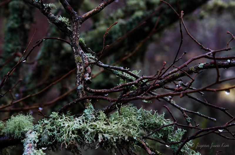 Scotland-Loch-Ness-8592.jpg