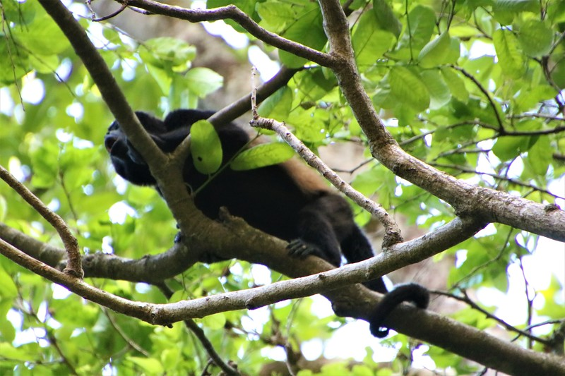 2020 Costa Rica 0497.JPG