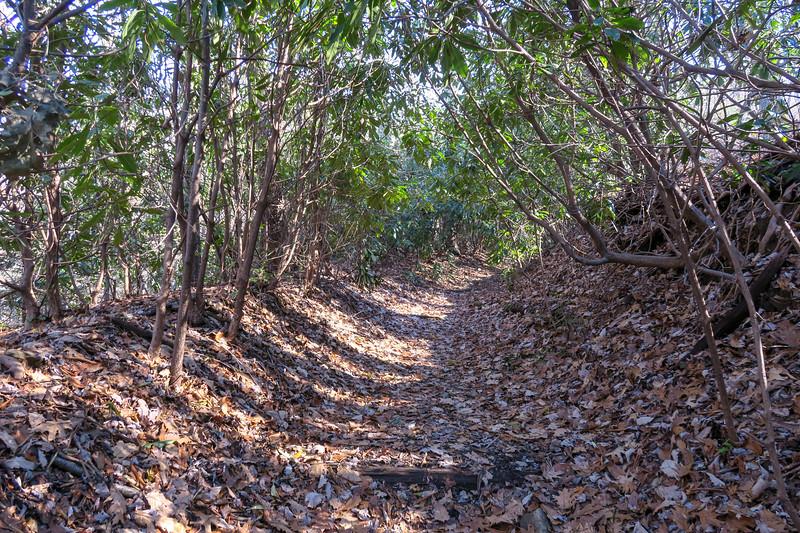 Club Gap Trail -- 3,450'
