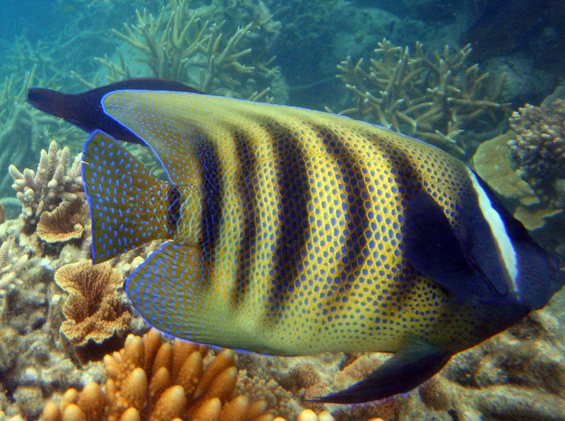 fish striped 1.jpg