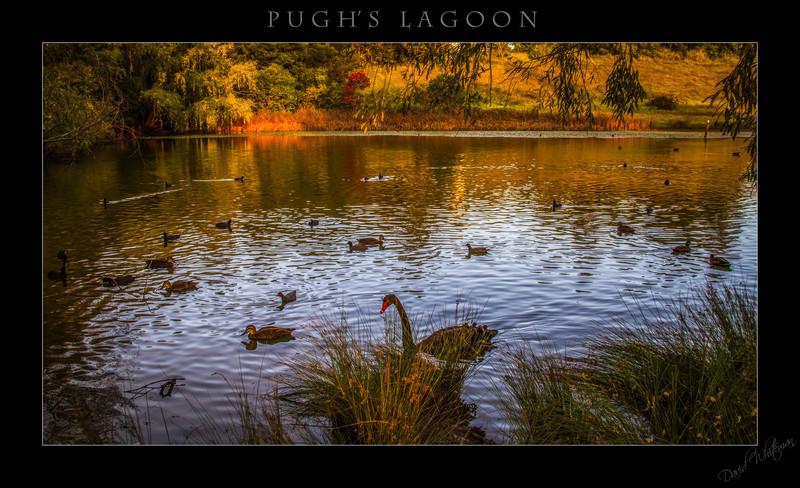 Pughs Lagoon