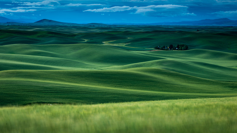 Palouse Wheat Fields (1 of 1).jpg