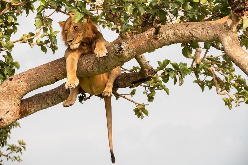 Uganda_T_QE-440.jpg