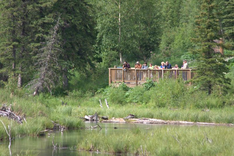 Moose-watchers