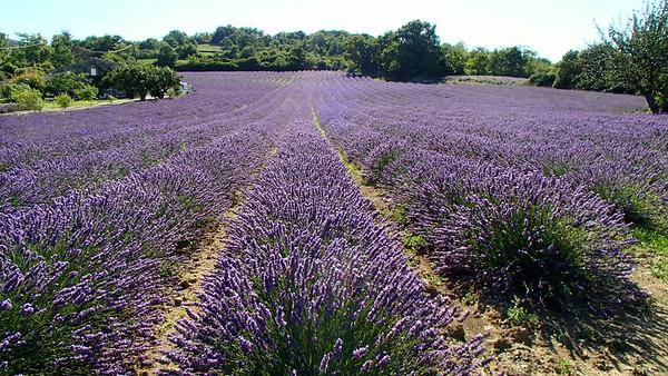 Provence Summer 2014