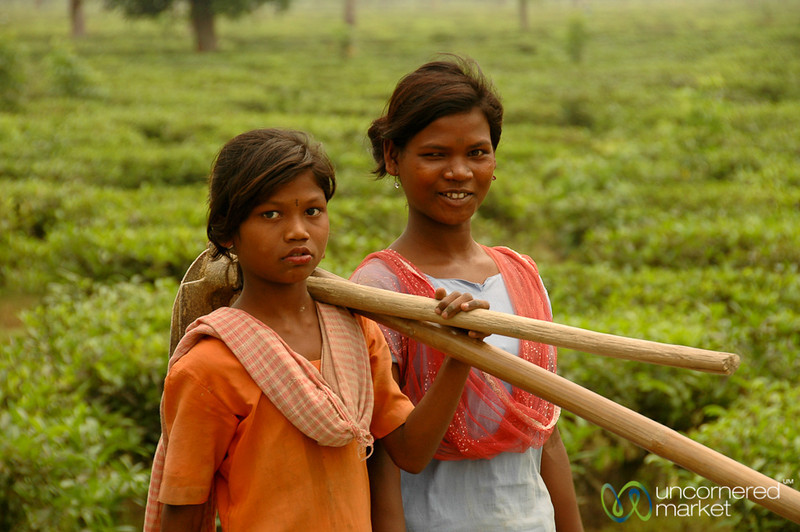 Caring for the Tea Plants - West Bengal, India