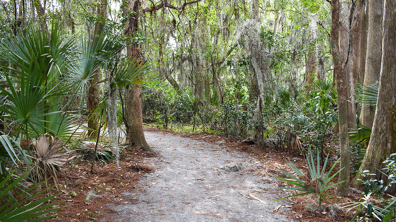 Gravel path in woods