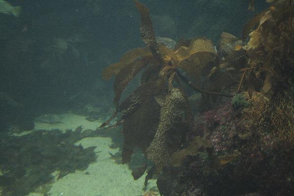 Monterey Bay Aquarium (VIII)