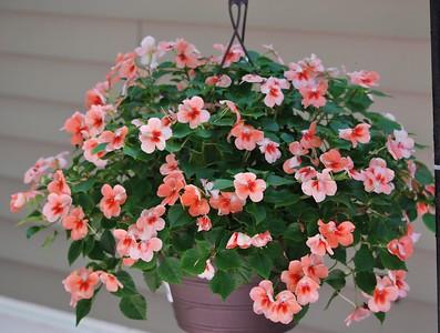 2012-06-16 Flowers