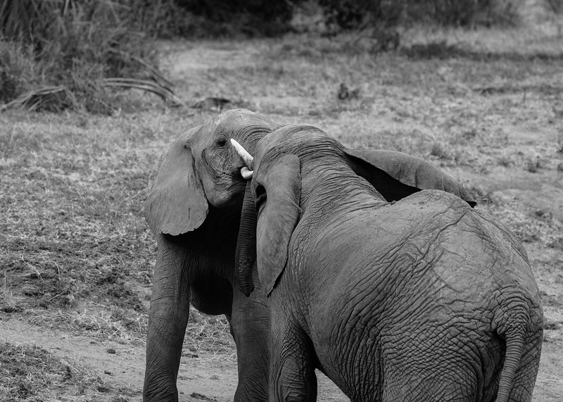 safari-2018-9.jpg