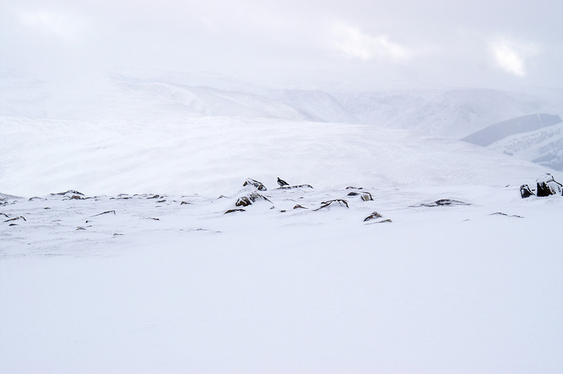 Ptarmigan at around 900m near the summit of Geal Charn