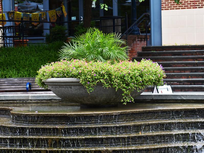 Flowered Waterfall.jpg