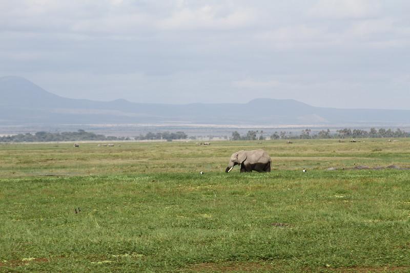 Kenya 2019 #2 840.JPG
