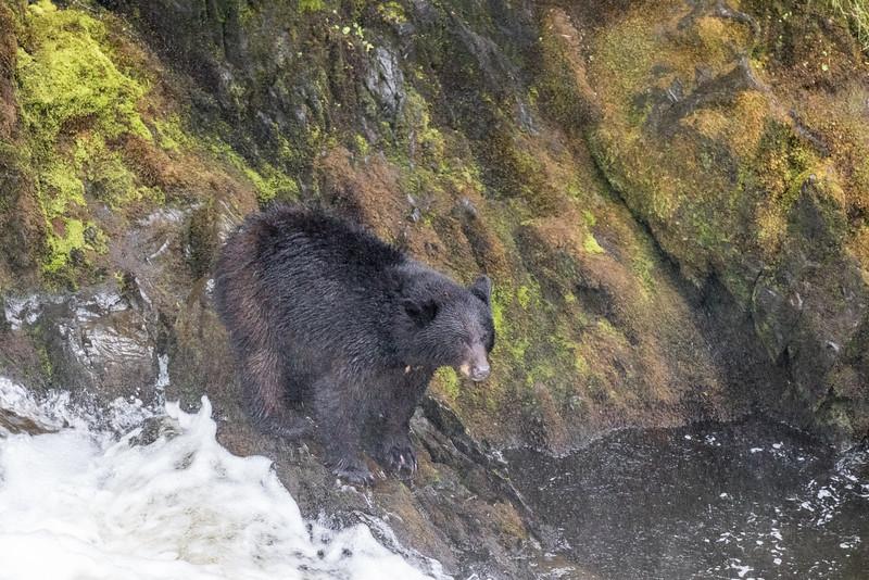 Alaska 2015 - Ketchican -  072815-047.jpg