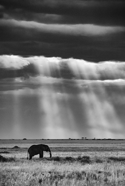 Elephant-sunset-rays-of-light-serengeti-4.jpg
