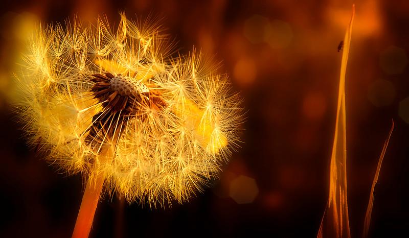 The Magic of Light-004.jpg