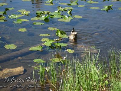 Nymph Lake Hike 7-5-2010