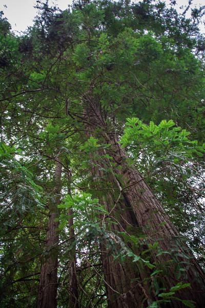 Redwood-58.jpg