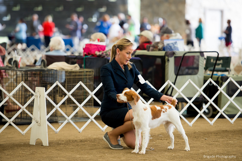 2019 Malibu Kennel Club-9707.jpg