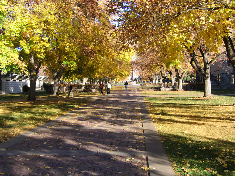 Fall colors on UoM campus.