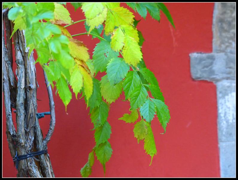 2014-11 Montecatini Alto 175.jpg