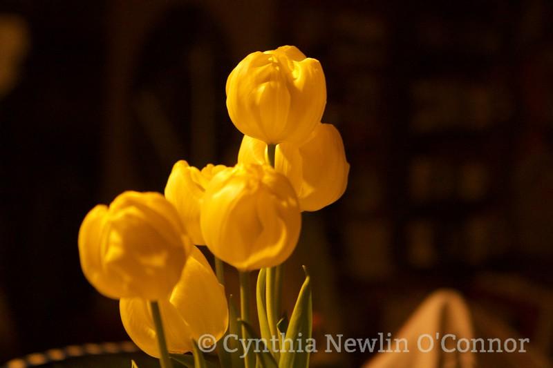 Yellow Whispers.JPG