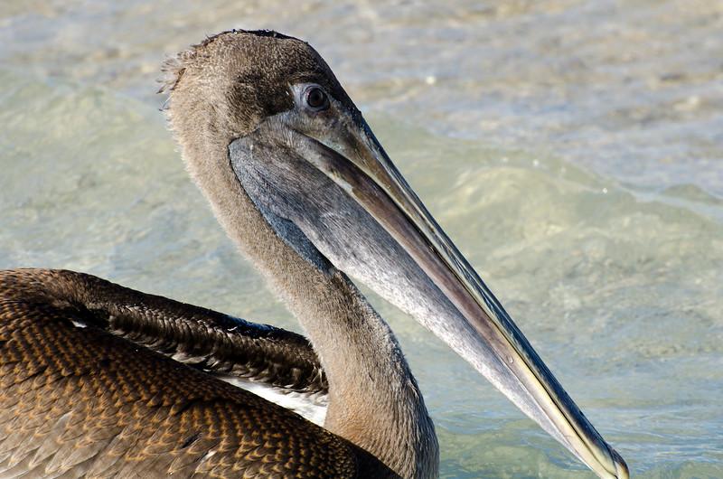 Galapagos-94.jpg
