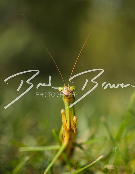 GrasshopperStandOff.jpg