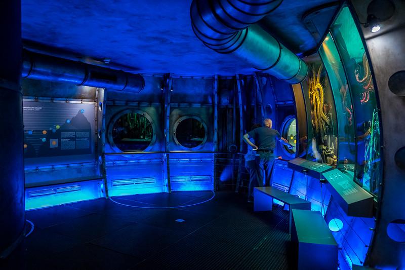 Submarine in Biosphere Potsdam