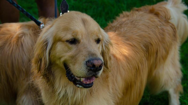 PuppyParty18-356.jpg