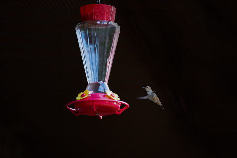 humming bird (48 of 55).jpg
