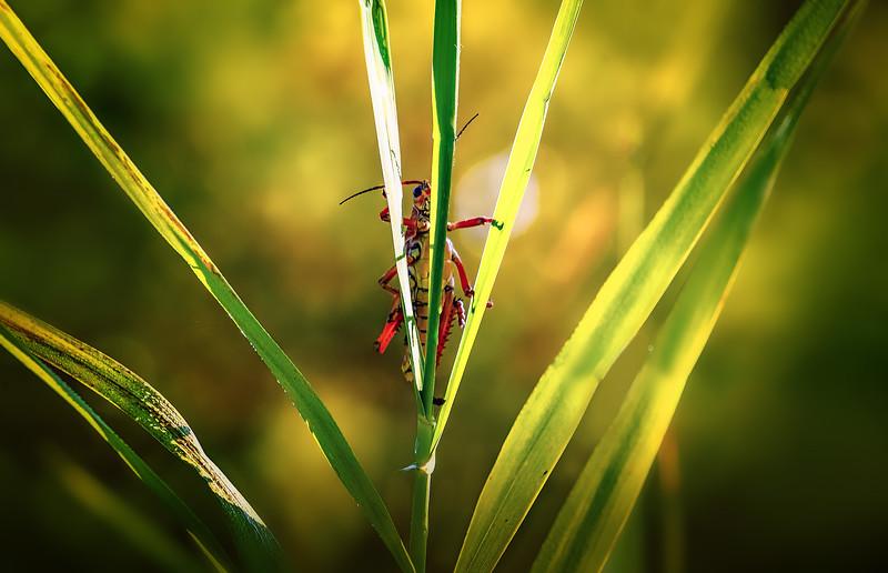 Grasshoppers 78.jpg