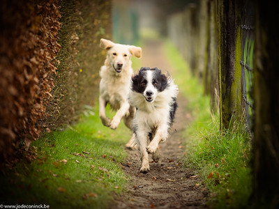 2101 Dogwalk Asbeek-Essene