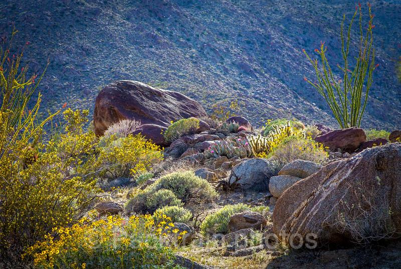 Cosy Desert Rock Garden - CDRG - 1