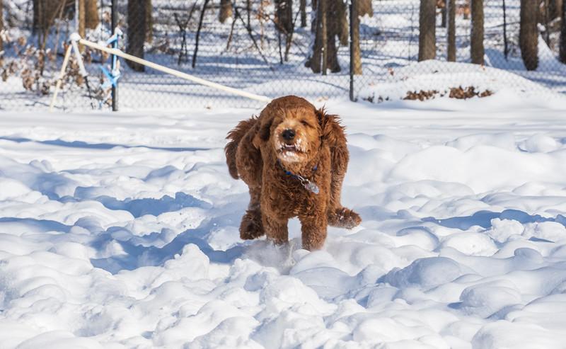 Calvin-7months-snow7-January2019.jpg