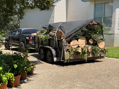 Chinaberry Tree Removal - Sep 2021