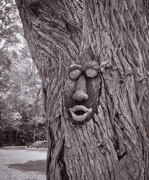 Treeface-7586.jpg